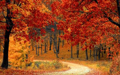 Episode 249: Fall Organizing Checklist